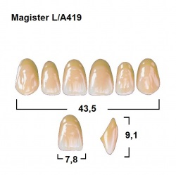 Magister Inc C3 419 ök