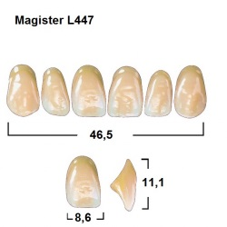 Magister Inc C3 447 ök