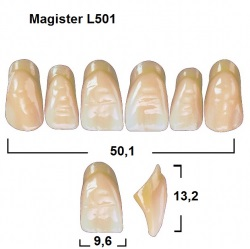 Magister Inc C3 501 ök