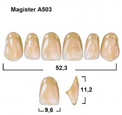 Magister Inc C3 503 ök