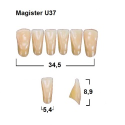 Magister Inc C3 U37 uk